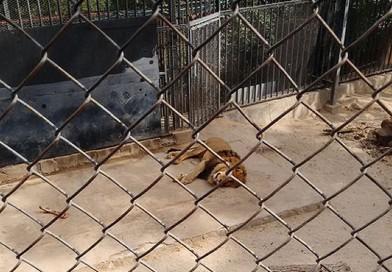 MUERTE DE LOS LEONES: EVOLUCION DE PARADIGMAS